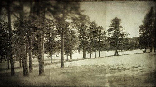trees blackandwhite forest canon landscape colorado aged textured 16x9 elkmeadow bergenpeak t1i