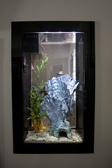 fish-tank-aquarium-custom-installed-bradenton-sarasota-florida-11