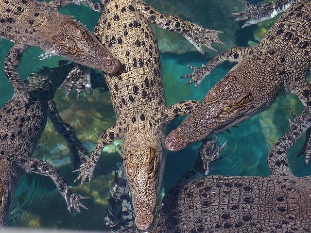 Crocosaurus Cove Darwin