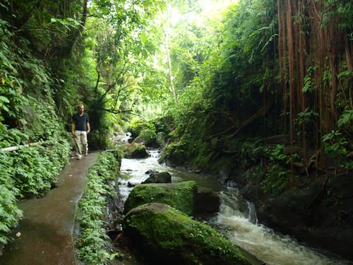 бали, обезьяний лес