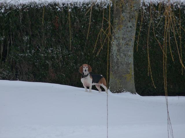 Tours-Nord sous la neige. Square Mariotte.