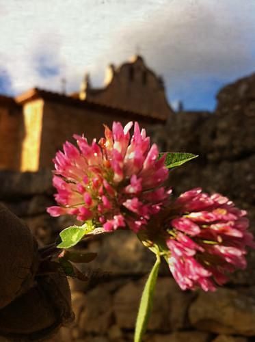 Hermita tras la flor