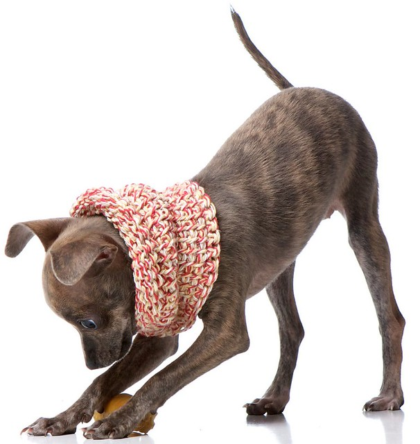 sciarpe-cani-charlie-diesel-04