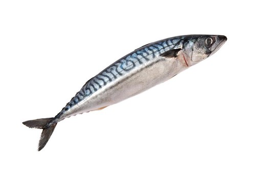 Sgombro, pesce azzurro