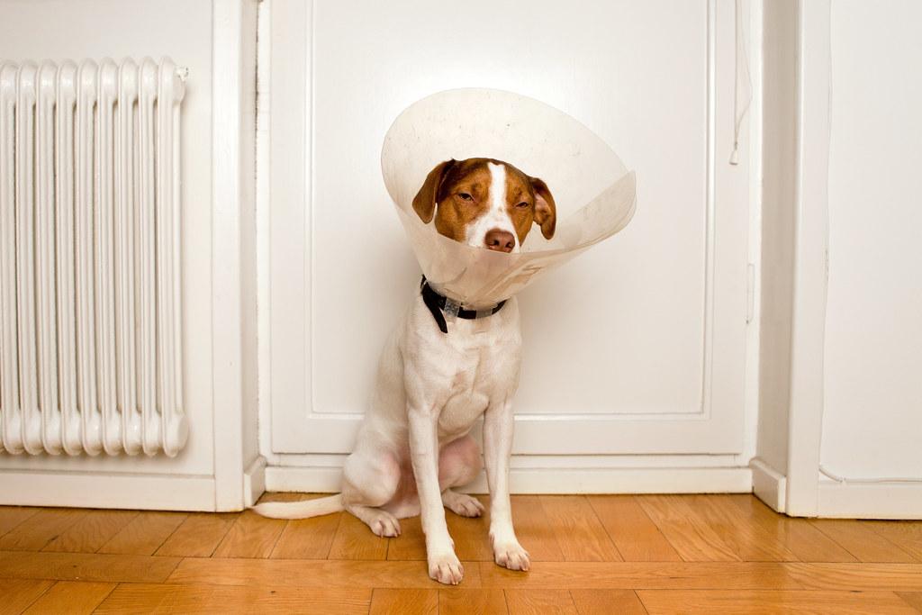 Cone of shame