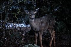 """My Deer """"Friends"""""""