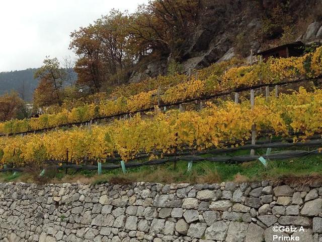 Suedtirol gitschberg jochtal 3 radltour okt2013 027 for Koi garden rio di pusteria