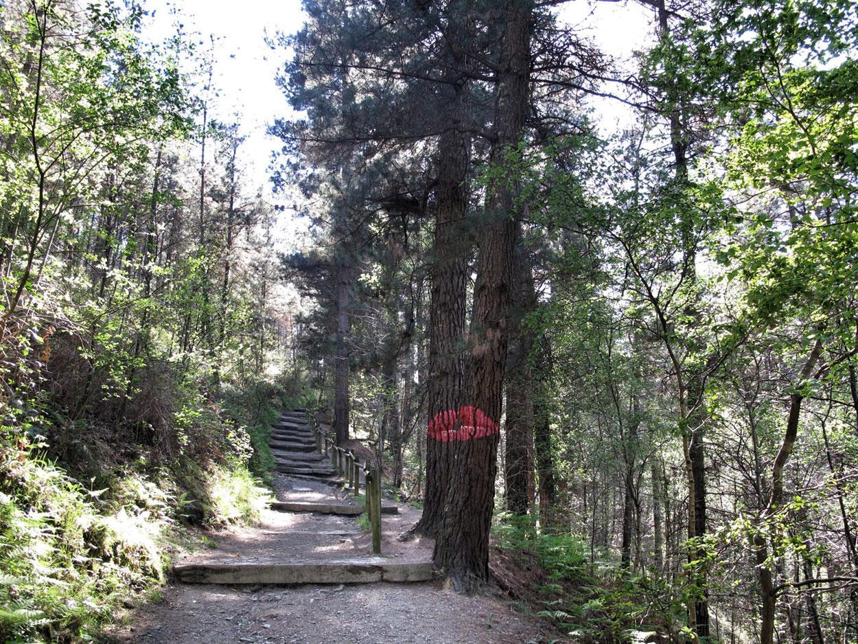 bosque de oma_invitacion al beso_agustin ibarrola