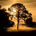 Sunrise Silhouette by Don Sullivan