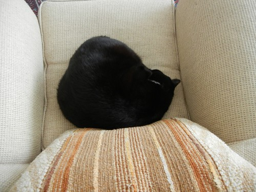 Cat _ 8107