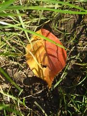 Two tone leaf