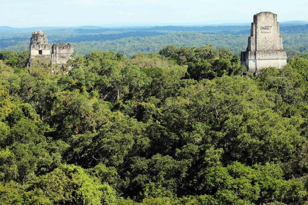 Templos con selva en Tikal