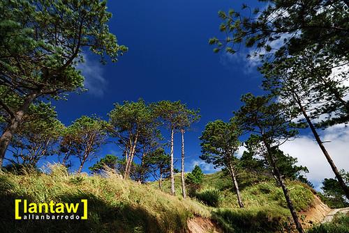 Salacsac Pine Forest 8