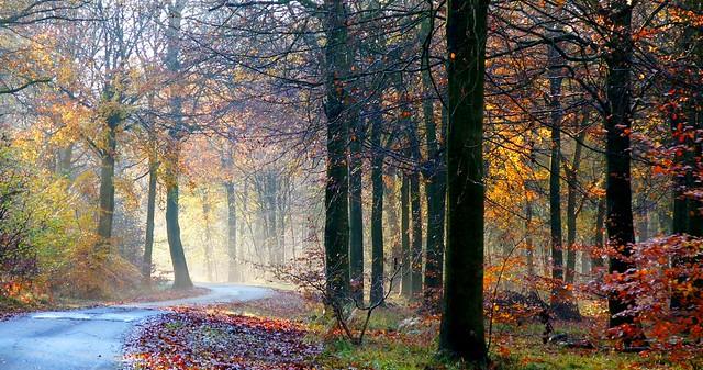 Magic Woodland