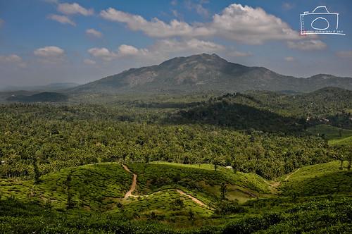 trek estate tea kerala hike chembra wayanad 2011