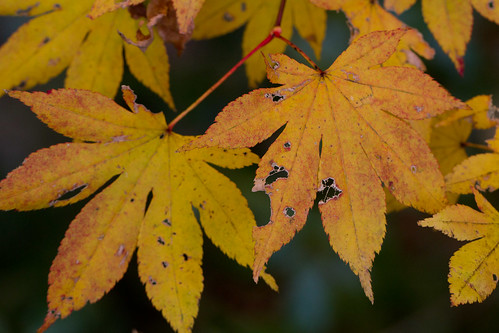 Autumn Leaves12