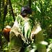 Guatemala: Rainforest Alliance