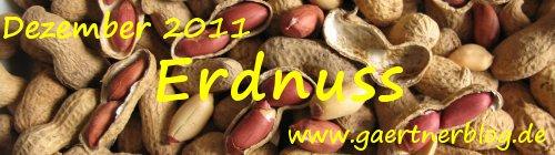 Garten-Koch-Event Dezember 2011: Erdnuss [31.12.2011]