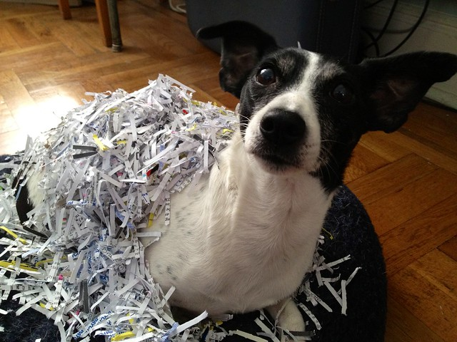 sprout and some shredded paper