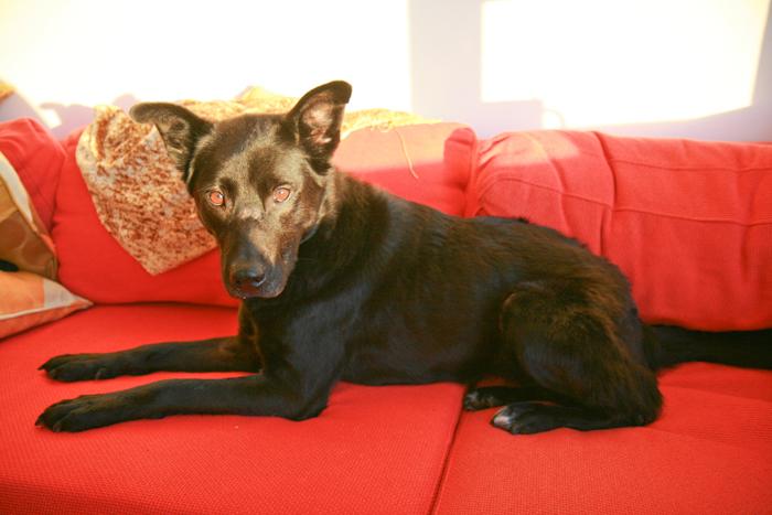 Image Result For Dogwood Dog Training