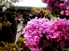 Victorian Garden_18