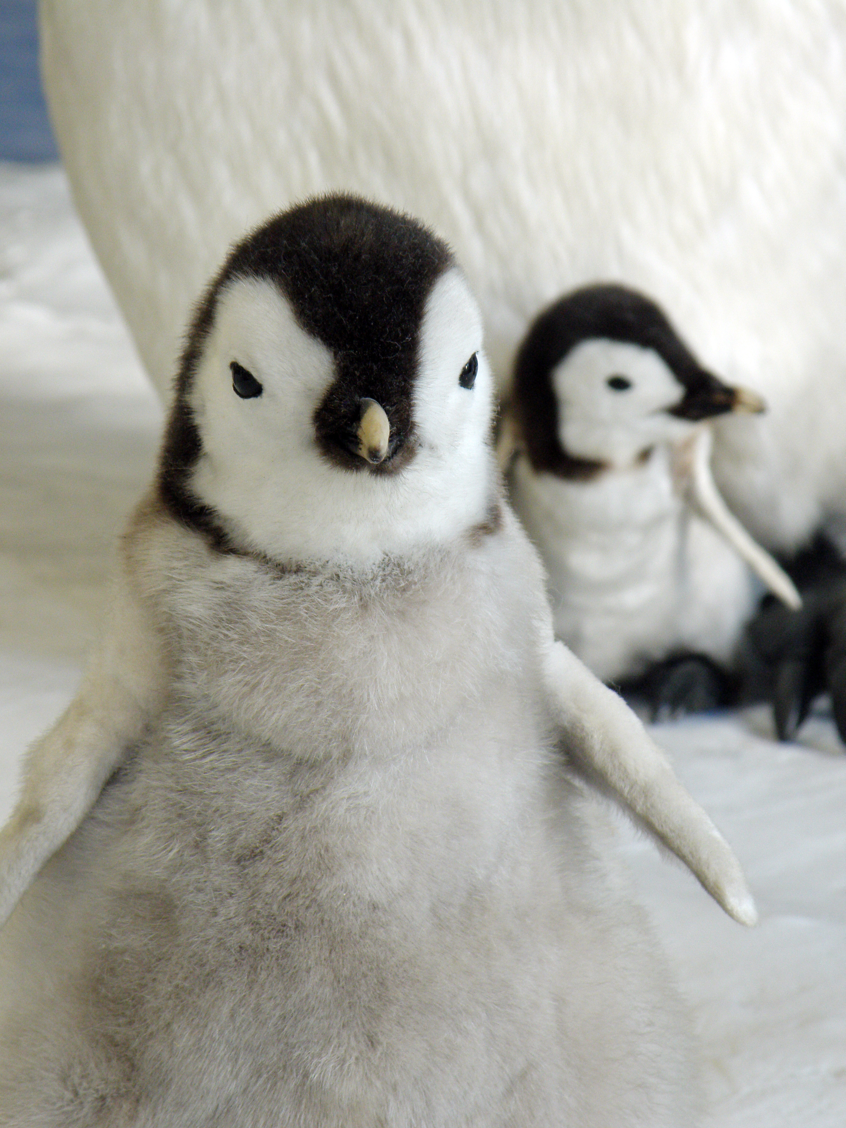 Penguin Flickr Photo Sharing