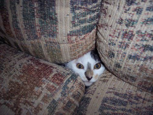 Image result for cat in couch