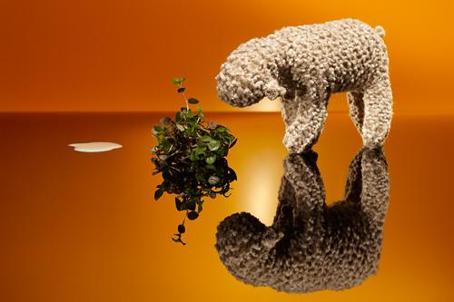Sheep2011 0508_1
