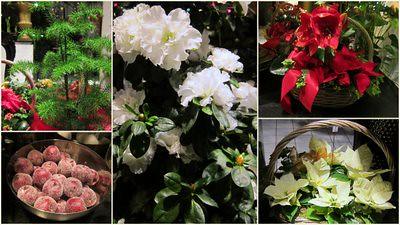 Kukkakaupassa by Anna Amnell