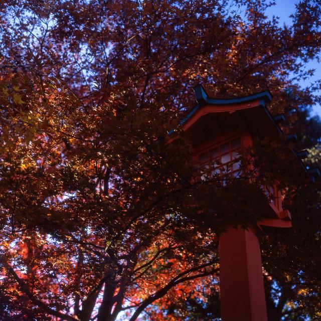 年の瀬秋景色