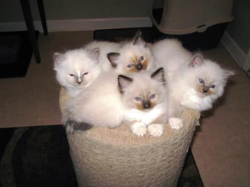 Kittens4_2011