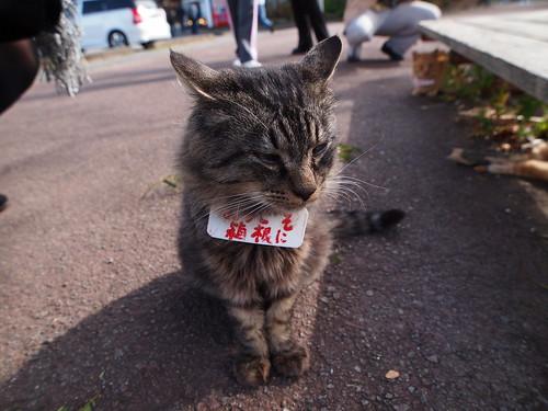芦ノ湖畔 猫