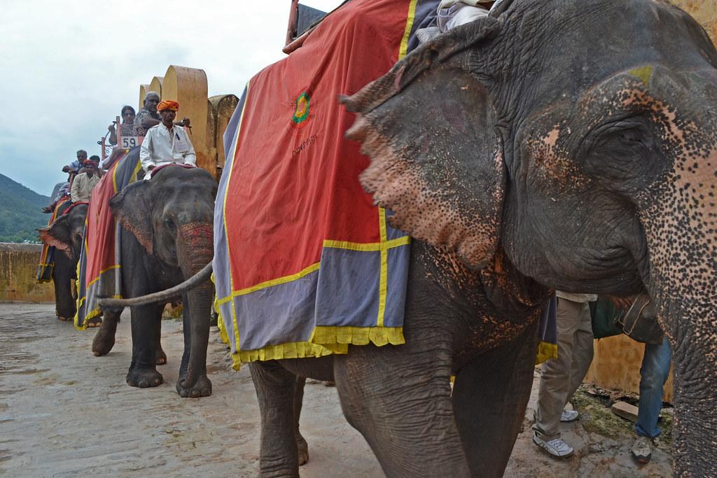 Чтобы не свалиться со слона, нужно постоянно балансировать.