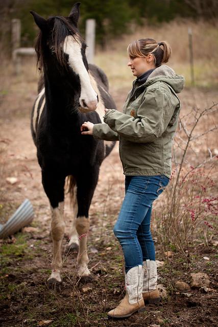 Horses 9371