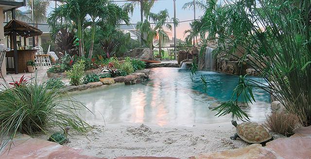 Landscaping Swimming Pool Tropical Plants Sarasota