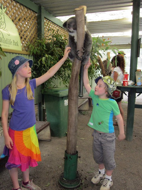Featherdale - Kids patting Koala