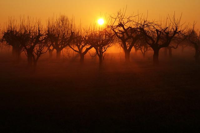 The mist-trees