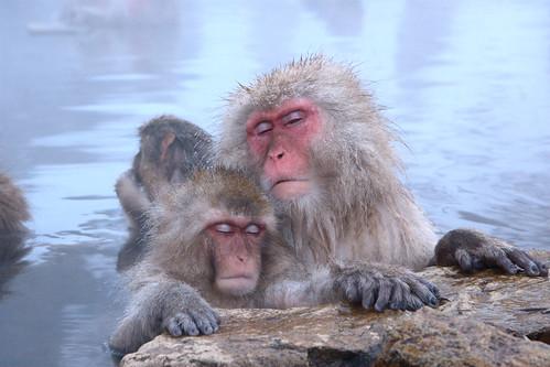 [フリー画像素材] 動物 1, 猿・サル, ニホンザル, お風呂・シャワー ID:201201211000