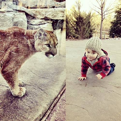 this is my son, deliberately taunting the puma that wants to eat him.