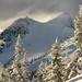 A Snowy Yak by justb