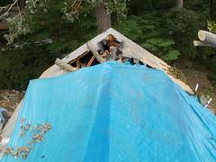 Tree Strike on Surry, VA house