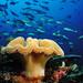 mushroom & fishes