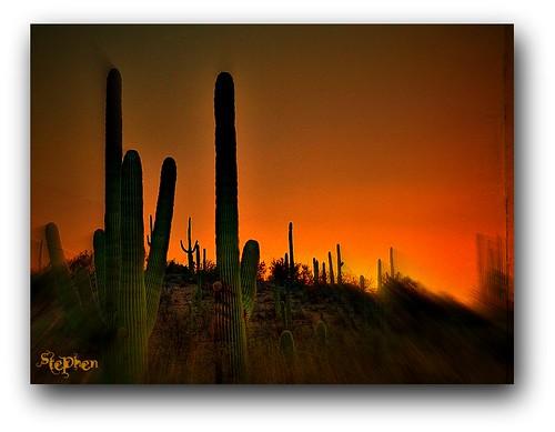 sunset arizona cactus zonsondergang nikon sonnenuntergang pôrdosol kodachrome 日落 puestadelsol ηλιοβασίλεμα غروب organpipe západslunce focalzoom