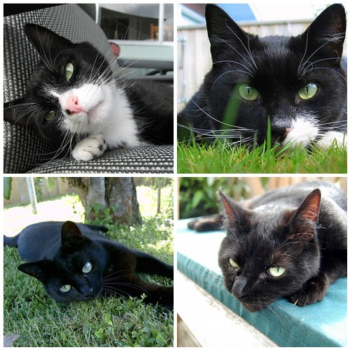 My favourite pics of my kitty crew :-)