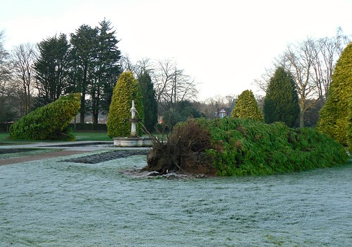 Fallen conifers, Beveridge Park, Kirkcaldy
