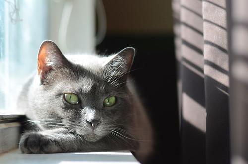 Zasha in window