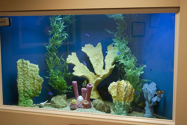 Fish tank aquarium custom installed bradenton sarasota for Fish tank camera