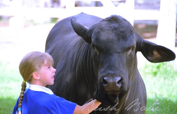 bull_0580 b'