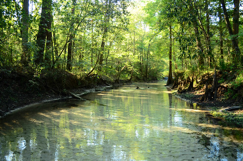 park water spring florida clear springs panhandle poncedeleonsprings
