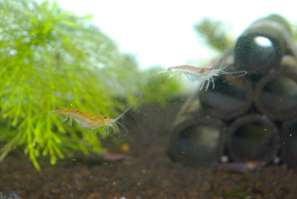 我的火焰蝦(da18-55mm +內閃)
